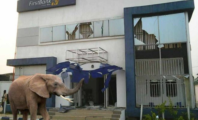 Mysterious Elephant Swallows N125m In Lagos (See Photos)