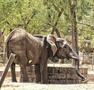 Starving elephant spotted at a Maiduguri zoo in Borno State