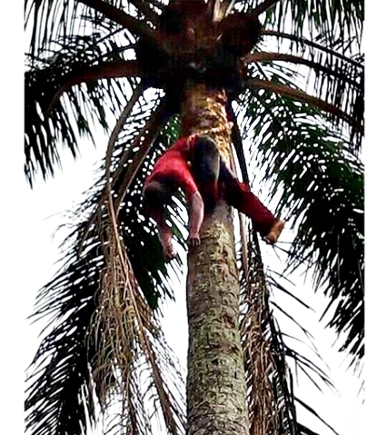 Residents In Total Shock As Man Dies On A Tree While Tapping Palm Wine In Imo State (Photo)