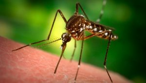 New malaria drug makes human blood toxic to mosquitoes