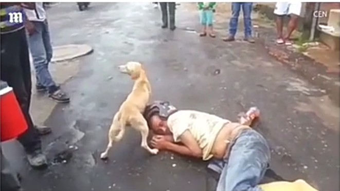 Dog Stops Everyone From Waking Up Its Drunk Owner (Video)