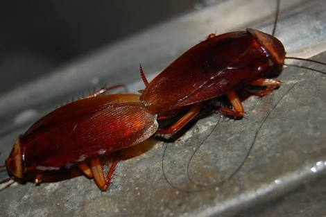 Hilarious! See What This Guy Did After He Caught 2 Cockroach Having Sex (photos)