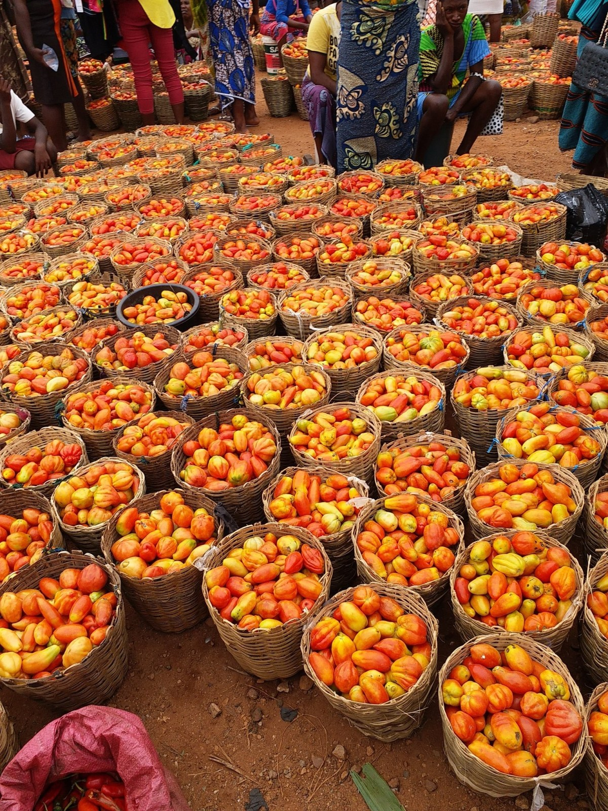 A Town In Benue State Where A Whole Basket Of Tomatoes Goes For N50 (Photos)