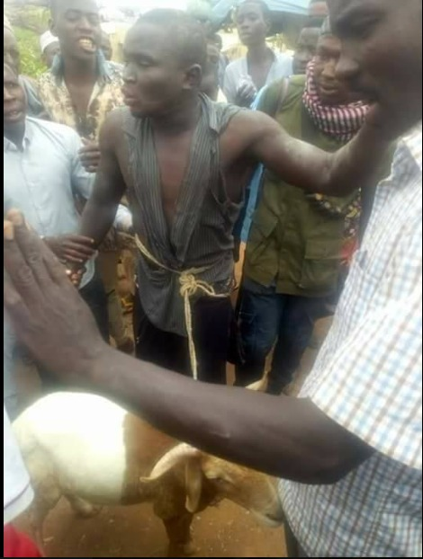 Photos: Notorious Thief Nabbed While Trying To Sell Stolen Ram For Sallah