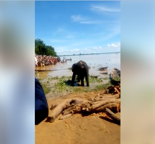 Villagers Gathered In Their Numbers After Three Elephants Were Spotted In Kebbi (Video, Photos)