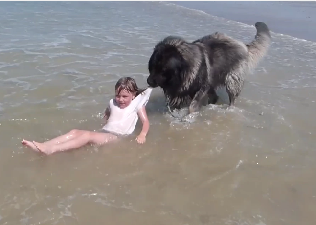 Brave Dog Rescues Little Girl From Drowning (Photos)