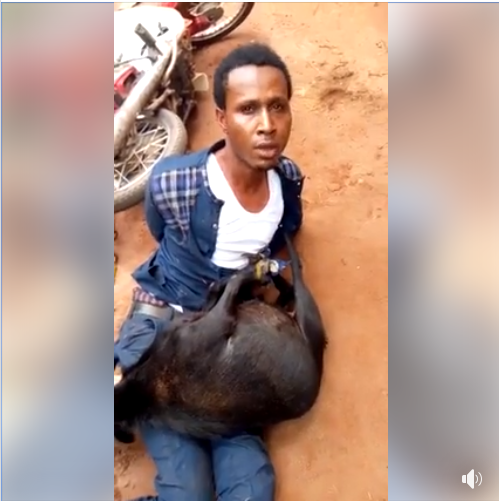 Pastor Disgraced After Being Caught Stealing Goat In Anambra State (Photos)