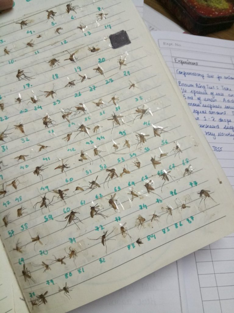 PHOTOS: Lady Hailed After She Shared Photos Of All The Mosquitoes She Has Killed