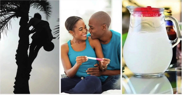 Effects Of Palm Wine On Male And Female Fertility