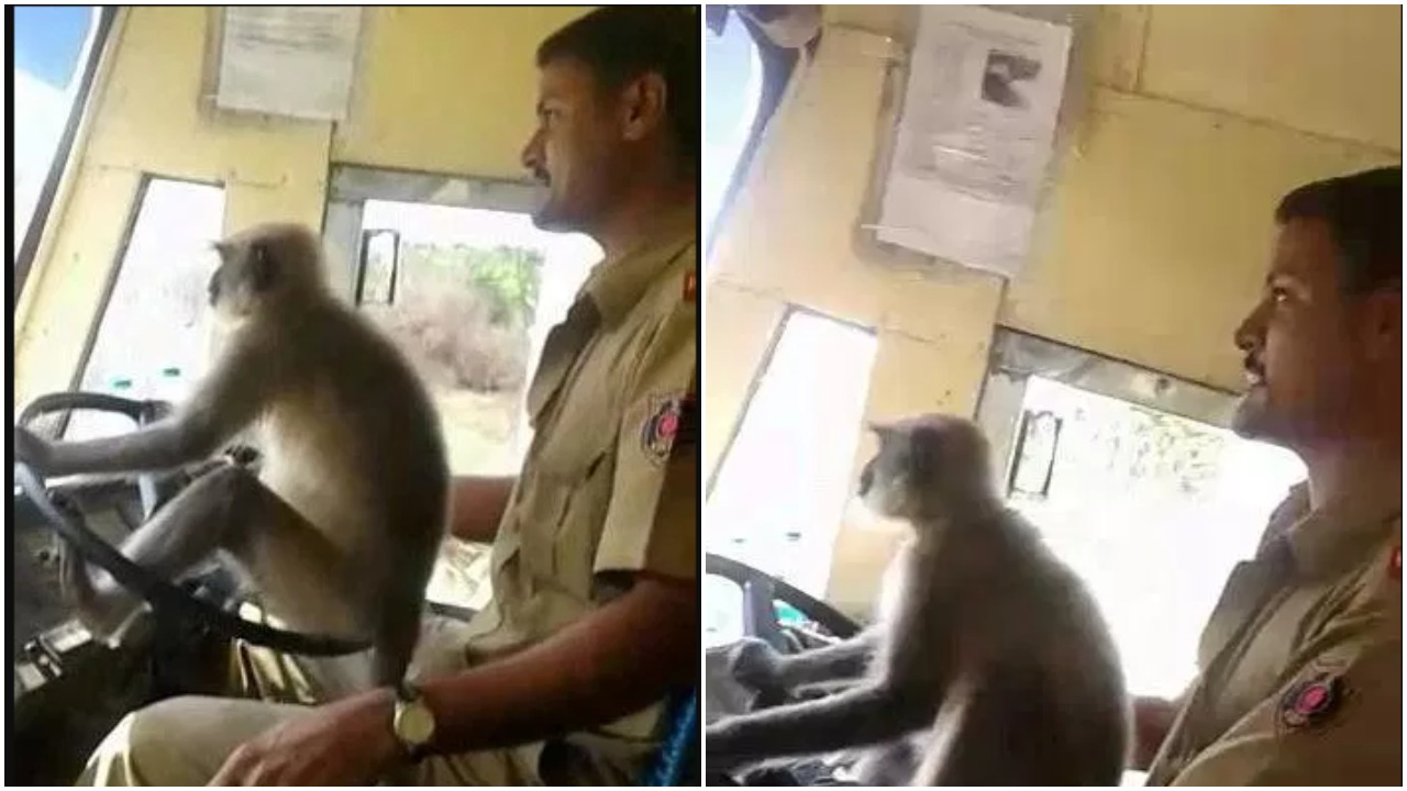Driver Suspended After Allowing Monkey Drive Bus In Front Of Shocked Passengers