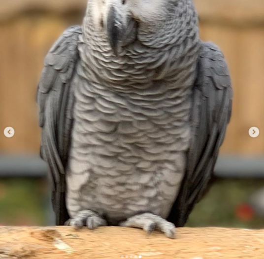 Five Parrots removed at British zoo